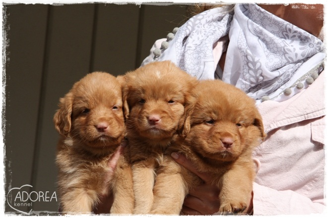 The girls in Adoreas Red C-litter
