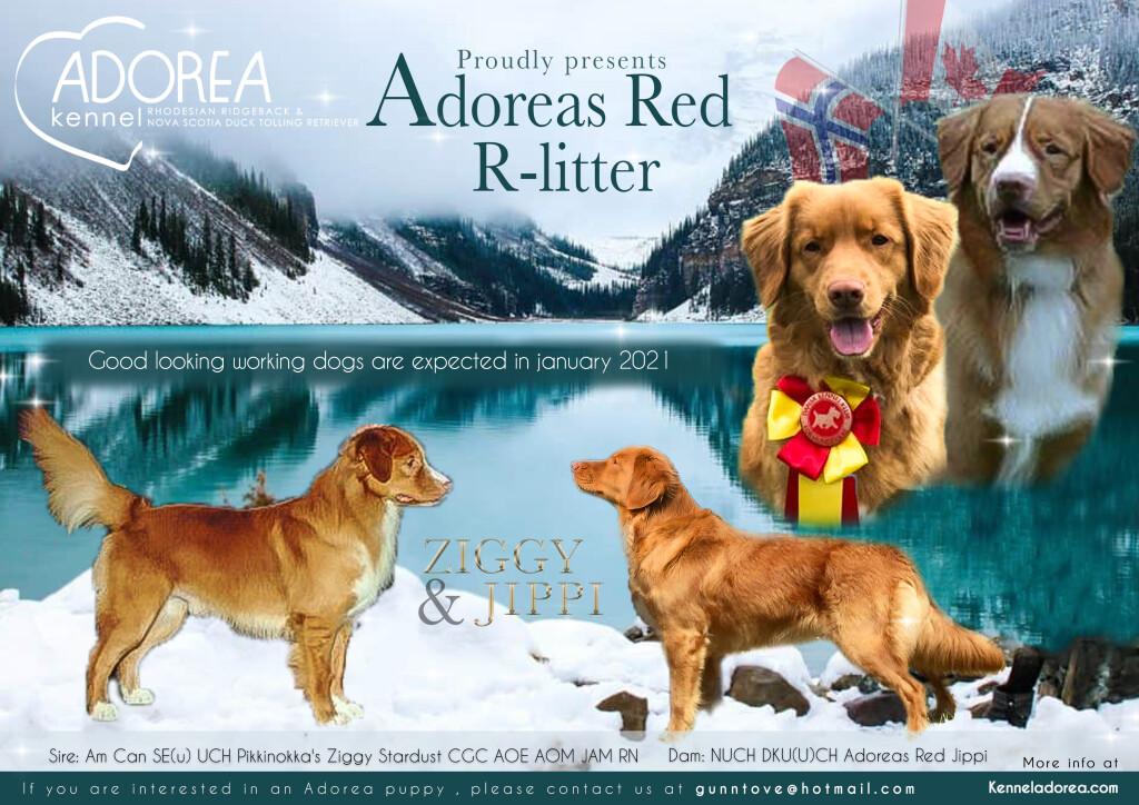 Adoreas_redRlitter_1