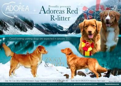 Adoreas_redRlitter_1lite